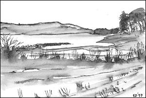 Ruin av brygge ved Nes gård; Frances Dodman